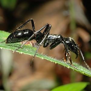 Capítulo 5: uma pequena grande formiga